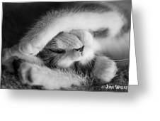 Lazy Day Bw Greeting Card