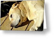 Lazy Farm Dog Greeting Card