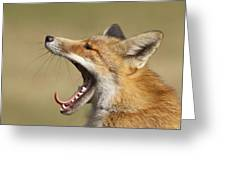 Lazy Fox Greeting Card