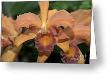 Lc. Roy Mcmillan  9865 Greeting Card