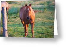 Lead Horse Greeting Card
