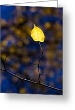 Leading Light Greeting Card