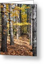 Leading To Autumn Greeting Card