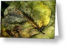 Leaf #1 Greeting Card