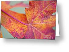 Leaf Abstract In Pink Greeting Card