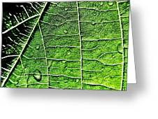 Leaf Abstract - Macro Photography Greeting Card