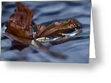 Leaf Afloat Greeting Card by Nancy Edwards