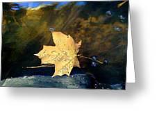 Leaf Afloat Greeting Card