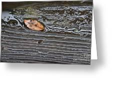 Leaf After Rain Greeting Card