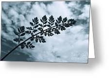 Leaf And Sky Greeting Card