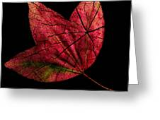 Leaf And Tree Greeting Card