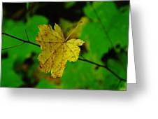 Leaf Caught On A Branch Greeting Card