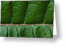 Leaf Close Up Greeting Card