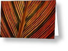 Cannas Plant Leaf Closeup Greeting Card