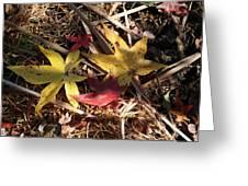 Leaf Collage Greeting Card