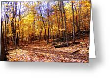 Leaf Covered Trail Greeting Card