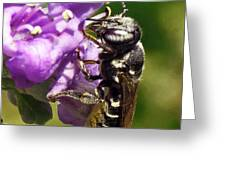 Leaf Cutter Bee Greeting Card