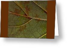 Leaf Design I Greeting Card