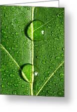 Leaf Dew Drop Number 10 Greeting Card