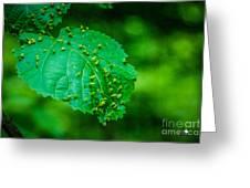 Leaf Gall Greeting Card