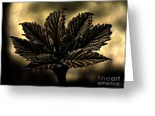 Leaf In A Special Light Greeting Card