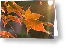 Leaf In The Sun Greeting Card