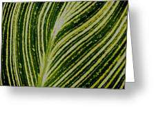 Leaf Lines Greeting Card