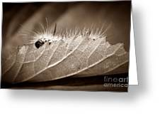 Leaf Muncher Greeting Card