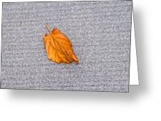 Leaf On Granite 1 Greeting Card