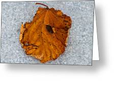 Leaf On Granite 11 - Square Greeting Card