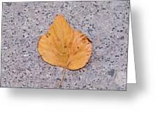 Leaf On Granite 2 - Square Greeting Card