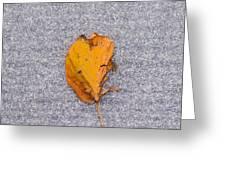 Leaf On Granite 3 - Square Greeting Card