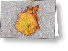 Leaf On Granite 4 - Square Greeting Card