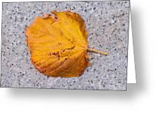 Leaf On Granite 7 - Square Greeting Card
