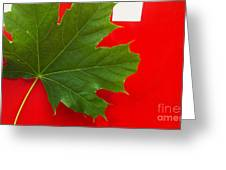 Leaf On Sign Greeting Card