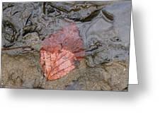 Leaf On The Riverbank Greeting Card by Paula Tohline Calhoun