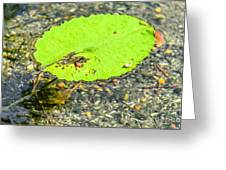 Leaf On The Water Greeting Card