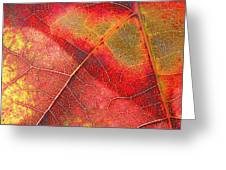Leaf Pattern_1 Greeting Card