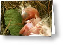 Leaf Pillow Greeting Card by Shane Holsclaw