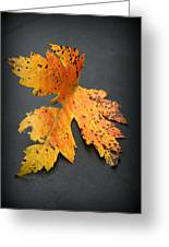Leaf Portrait Greeting Card