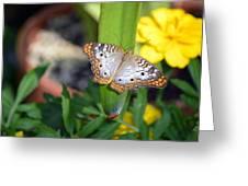 Leaf Sitter Greeting Card