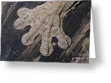 Leaf-tailed Gecko Foot Greeting Card