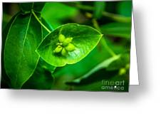 Leaf With Seeds Greeting Card