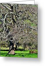 Leafless Tree Greeting Card