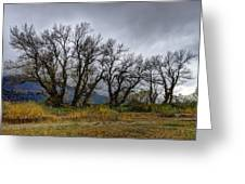 Leafless Trees Greeting Card