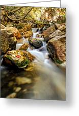 Leafs Resting On A Rock Greeting Card