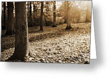 Leafy Autumn Woodland In Sepia Greeting Card