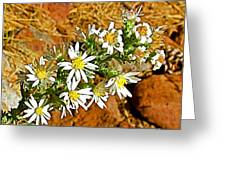 Leafy-bract Asters In Wildcat Canyon Trail Along Kolob Terrace Road In Zion National Park-utah Greeting Card