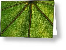 Leafy Green Greeting Card
