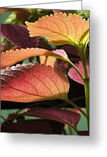 Leafy Plant Greeting Card by Nelson Watkins
